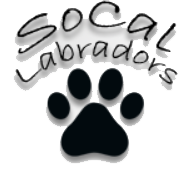 Socal Labadors | Champion Line English labradors